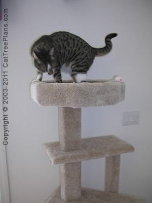 Cat Condo Plans Directions 5 Detail 3