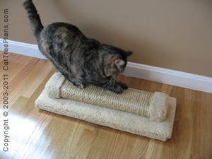 how to stop cats scratching walld