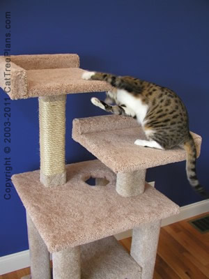 Build A Cat Tree House