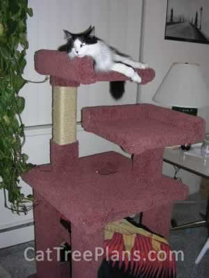 how to make a cat tree Cat Tree Plans Customer 028