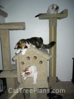 how to make a cat tree Cat Tree Plans Customer 037