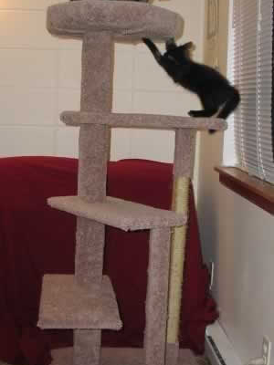 Cat Tree Plans 10 For 9 95 Cat Furniture Plans How To