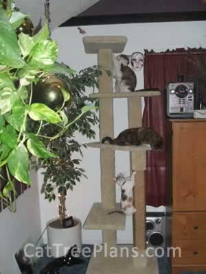 how to make a cat tree Cat Tree Plans Customer 095