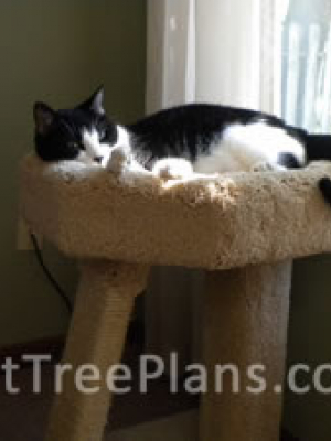 how to make a cat tree Cat Tree Plans Customer 117