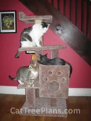 Cat Tree Plans Customer 024