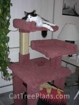 Cat Tree Plans Customer 028