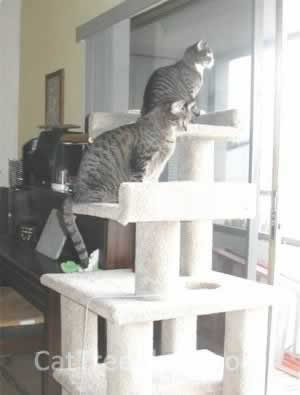 Cat Tree Plans Customer 029