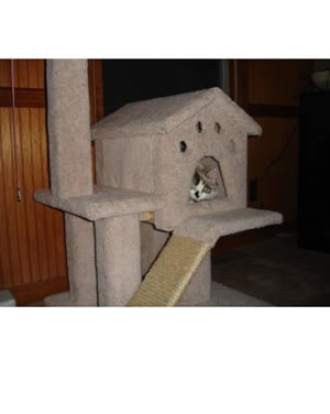 Cat Tree Plans Customer 086