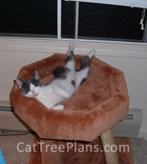 Cat Tree Plans Customer 104