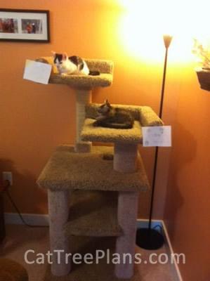 Cat Tree Plans Customer 116