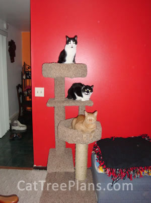 Cat Tree Plans Customer 148
