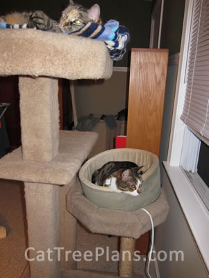 Cat Tree Plans Customer 149